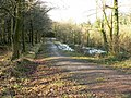 Forest walk, Hensol forest - geograph.org.uk - 1156888.jpg