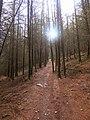 Forestry footpath - geograph.org.uk - 352293.jpg