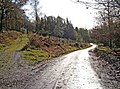 Forestry road, Wyre Forest - geograph.org.uk - 1623235.jpg