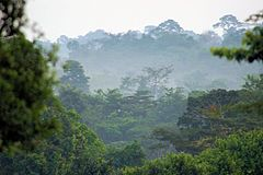 Forests and Woodlands, Ashanti region, South Ghana.jpg