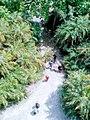 From Tower in Sundarban.jpg