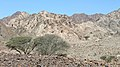 Fujairah - panoramio (2).jpg