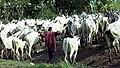 Fulani herdsman.jpg