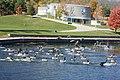 Gaggle of Canada Geese Alighting, Trent Canal, Peterborough, Ontario 3720 (5078962450).jpg