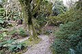 Garden steps. - panoramio.jpg