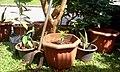 Gardening Cibubur Villa 2 - panoramio.jpg