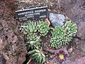Gardenology-IMG 5346 hunt10mar.jpg