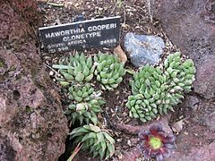 Gardenology-IMG 5346 hunt10mar.jpg