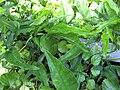 Gardenology.org-IMG 0744 rbgs10dec.jpg