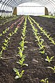 GeLa-Salat-Frühling.jpg