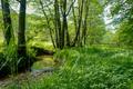 Geierstal Vielbrunn, Naturschutzgebiet, Hessen, Odenwaldkreis.png