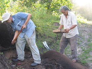 George Simon (artist and archaeologist) - Simon at work on the Berbice Archaeology Project, 2009.