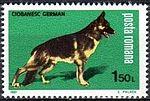 German-Shepherd-Canis-lupus-familiaris Romania 1981.jpg