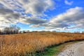 Gfp-illinois-beach-state-park-sky-over-prairie.jpg