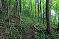 Gfp-pennsylvania-eerie-bluffs-state-park-wooded-walking-path.jpg