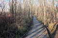 Gfp-wisconsin-pike-lake-state-park-wooden-walkway.jpg