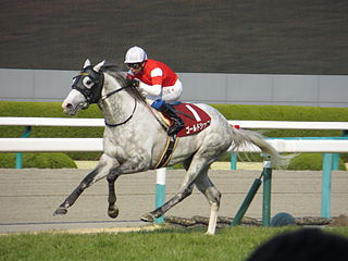 Gold Ship Japanese-bred Thoroughbred racehorse