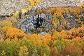 Golden fall foliage - Flickr - daveynin.jpg