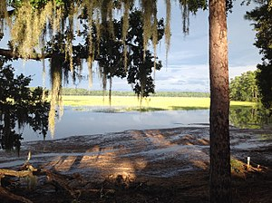 Callawassie Island - Golden marsh view over the Little Chechessee River