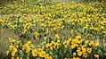 Grasshopper Flat, Malheur County (36114019144).jpg