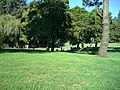 Grassy knoll with trees - panoramio.jpg