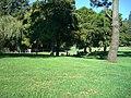 Grassy knoll with trees - panoramio.jpg