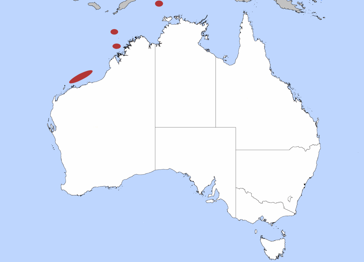Australia Map Grey.Australian Grey Smooth Hound Wikipedia