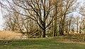 Groep bomen in verruigd biotoop. Locatie, Oostvaardersplassen 03.jpg