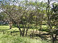 Guiguinto,Bulacanjf598.JPG