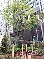 HK 西營盤 Sai Ying Pun 奇靈里 Ki Ling Lane 瑧蓺 Artisan House 忠正街 Chung Ching Street April 2019 SSG 03.jpg