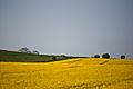 Hackpen Hill, Wiltshire, England, 23 April 2011 - Flickr - PhillipC (4).jpg