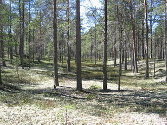 Hailuoto - Image: Hailuoto Forest Finland