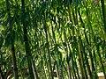 Hakone Gardens, Saratoga, CA - IMG 9143.JPG
