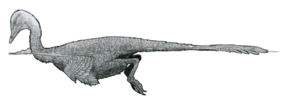 Halszkaraptor reconstruction by Tom Parker.png