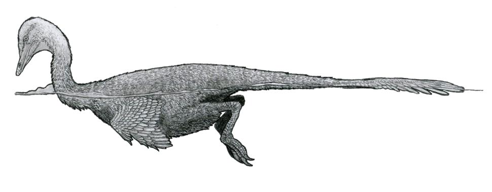 Halszkaraptor reconstruction by Tom Parker