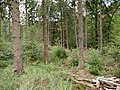 Hambach forest 16.jpg
