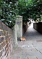 Hampstead alley cat - geograph.org.uk - 523034.jpg