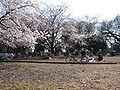 Hanami.jpg