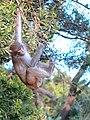 Hanging (40691715934).jpg