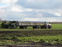 A farm field with a white tractor towing a long wagon with wood-plank walls used to collect vegetables. A farmer is standing on the back of the wagon, adjacent to a harvesting machine which uproots carrots from the field and sends them along a slanted conveyor belt to the farmer. In the foreground is a brown-coated dog.