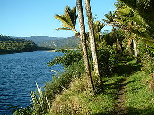 Heaphy Track - Nikau palms along the Heaphy River