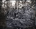 Heiau, Iao Valley, (2), photograph by Brother Bertram.jpg