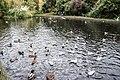 Herbert Park, Ballsbridge, Dublin -5302 (15549983580).jpg
