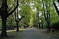 Herbst im Rombergpark - panoramio (1).jpg