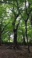 Highgate Wood 20170623 152937 (49400374058).jpg
