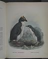 History of the birds of NZ 1st ed p344-2.jpg