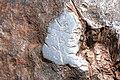 Hoba Meteorite vandalism.jpg