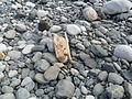 Hope river cobbles.jpg