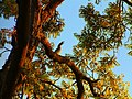 Hornbill - panoramio.jpg