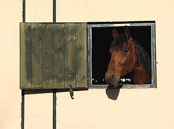 Horse looking out of stable window. Picture wa...